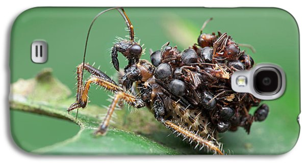 Assassin Bug Nymph With Ants Galaxy S4 Case by Melvyn Yeo