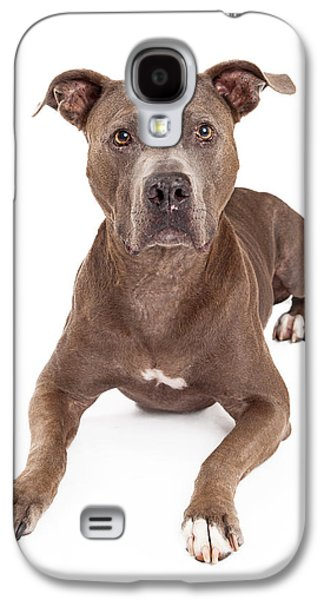 Guard Dog Galaxy S4 Cases - Attentive American Staffordshire Terrier Dog Laying Galaxy S4 Case by Susan  Schmitz