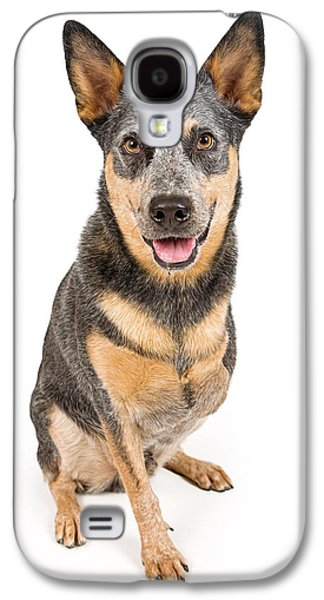 Cattle Dog Galaxy S4 Cases - Australian Cattle Dog With Missing Leg Isolated on White Galaxy S4 Case by Susan Schmitz