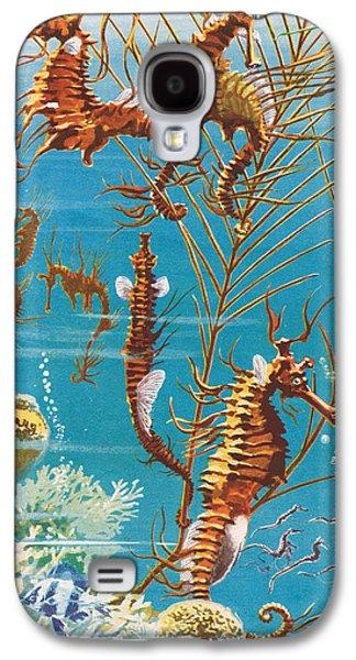 Aquatic Drawings Galaxy S4 Cases - Australian Seahorses Galaxy S4 Case by Leonard Robert Brightwell