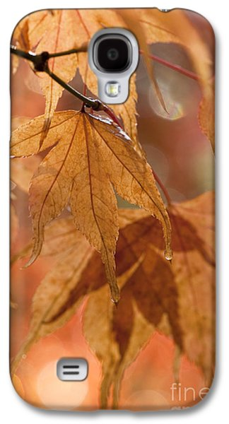 Close Focus Nature Scene Galaxy S4 Cases - Autumn Acer Galaxy S4 Case by Anne Gilbert
