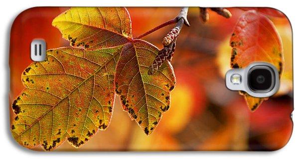 Becky Photographs Galaxy S4 Cases - #autumn Galaxy S4 Case by Becky Furgason