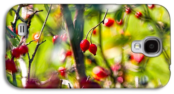 Berries Galaxy S4 Cases - Autumn Berries  Galaxy S4 Case by Stylianos Kleanthous