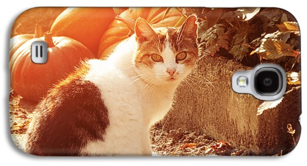 Posed Photographs Galaxy S4 Cases - Autumn Cat Galaxy S4 Case by Wim Lanclus
