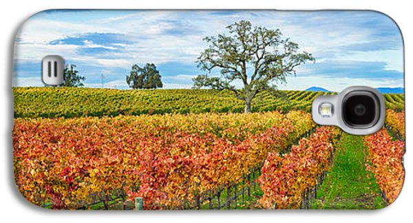 Sonoma County Vineyards. Galaxy S4 Cases - Autumn Color Vineyards, Guerneville Galaxy S4 Case by Panoramic Images
