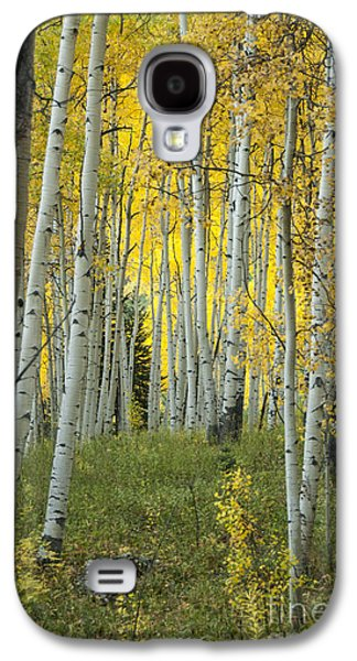 White River Galaxy S4 Cases - Autumn in the Aspen Grove Galaxy S4 Case by Juli Scalzi