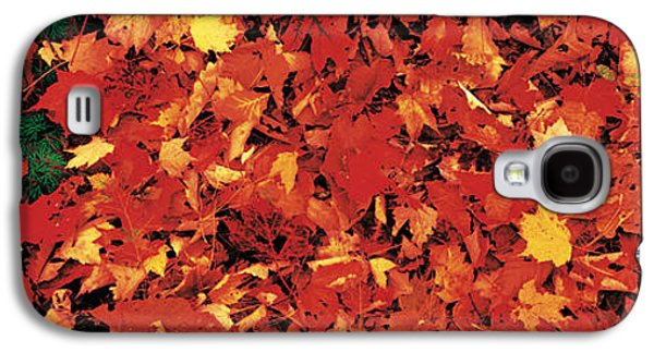 Forest Floor Galaxy S4 Cases - Autumn Leaves Great Smoky Mountains Galaxy S4 Case by Panoramic Images