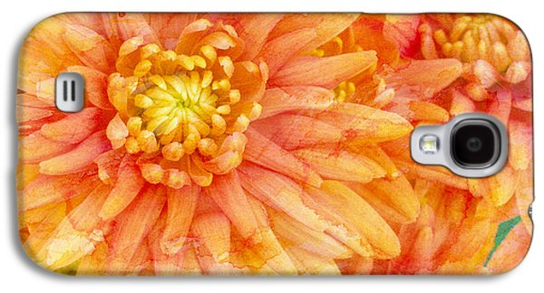 Orange Photographs Galaxy S4 Cases - Autumn Mums Galaxy S4 Case by Heidi Smith