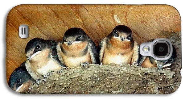 Mud Nest Galaxy S4 Cases - Baby Barn Swallows  Galaxy S4 Case by Dianne Cowen