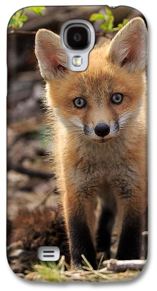 Red Fox Galaxy S4 Cases - Baby in the Wild Galaxy S4 Case by Everet Regal