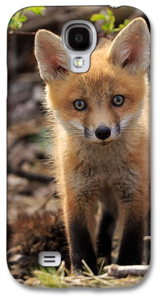 Fox Kit Galaxy S4 Cases - Baby in the Wild Galaxy S4 Case by Everet Regal