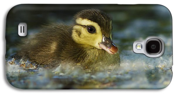Baby Bird Galaxy S4 Cases - Baby Wood Duck Galaxy S4 Case by Mircea Costina Photography