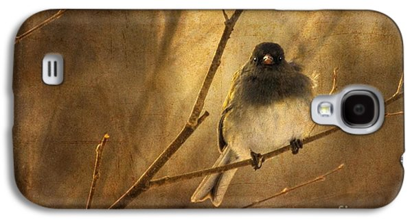 Wind Galaxy S4 Cases - Backlit Birdie Being Buffeted  Galaxy S4 Case by Lois Bryan