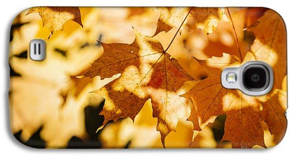 Maple Season Galaxy S4 Cases - Backlit fall maple leaves Galaxy S4 Case by Elena Elisseeva