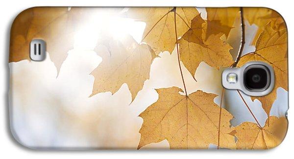 Maple Season Galaxy S4 Cases - Backlit fall maple leaves in sunshine Galaxy S4 Case by Elena Elisseeva