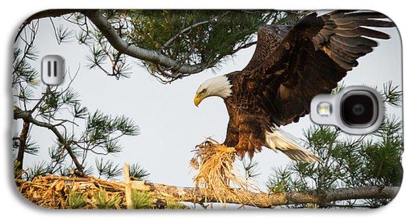 Bald Eagle Building Nest Galaxy S4 Case by Everet Regal