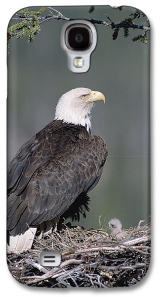 Three Chicks Galaxy S4 Cases - Bald Eagle On Nest With Chick Alaska Galaxy S4 Case by Michael Quinton