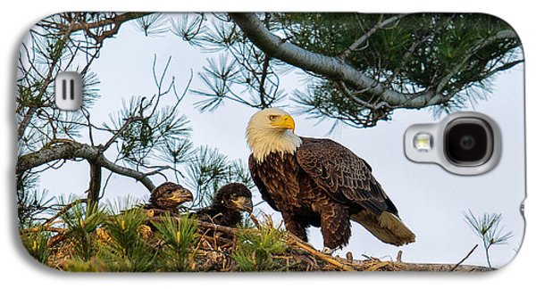 Bald Eagle With Eaglets  Galaxy S4 Case by Everet Regal