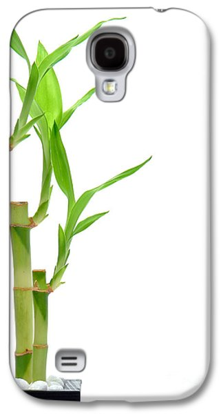 Bamboo Galaxy S4 Cases - Bamboo Stems in Black Vase Galaxy S4 Case by Olivier Le Queinec