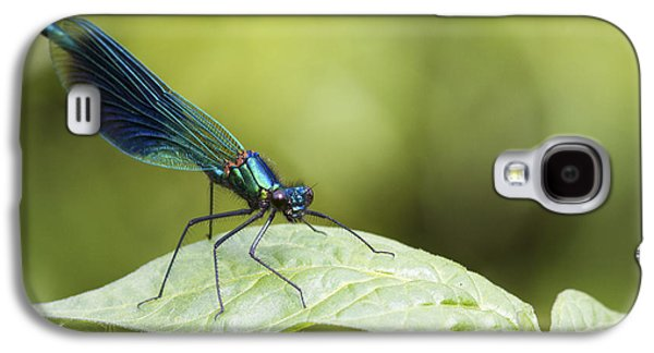 Demoiselles Galaxy S4 Cases - Banded demoiselle  Galaxy S4 Case by Chris Smith