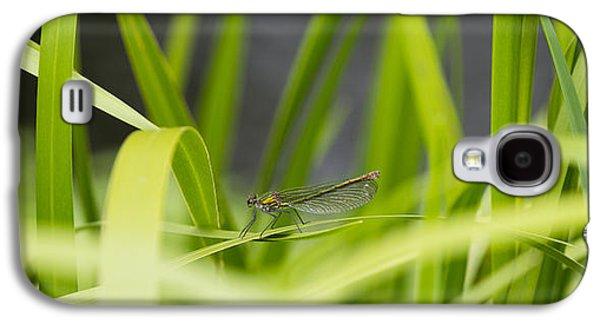 Demoiselles Galaxy S4 Cases - Banded Demoiselle Galaxy S4 Case by Steven Poulton