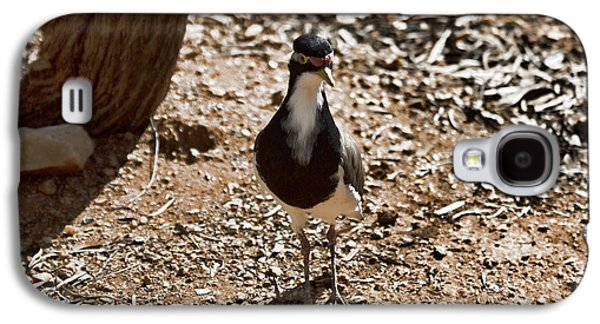 Banded Lapwing Galaxy S4 Case by Douglas Barnard