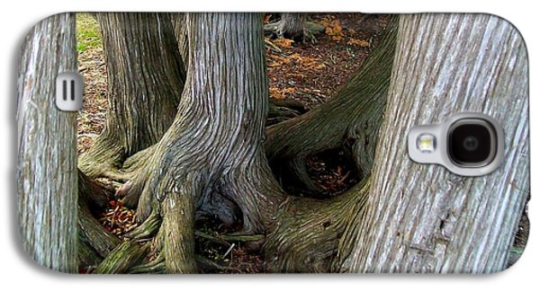 Tree Roots Galaxy S4 Cases - Barky Barky Trees Galaxy S4 Case by Michelle Calkins