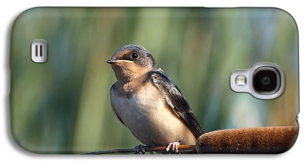 Swallow Chicks Galaxy S4 Cases - Barn Swallow Galaxy S4 Case by James Peterson