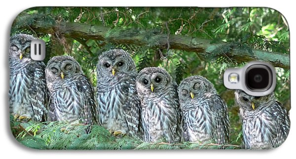 Outdoors Photographs Galaxy S4 Cases - Barred Owlets Nursery Galaxy S4 Case by Jennie Marie Schell