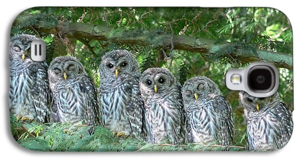Grey Photographs Galaxy S4 Cases - Barred Owlets Nursery Galaxy S4 Case by Jennie Marie Schell