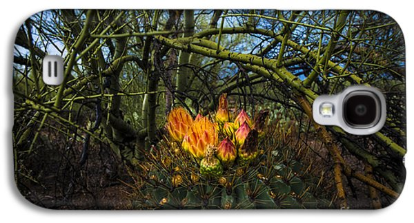 Barrel Cactus In Bloom 3 Galaxy S4 Case by Richard Mason