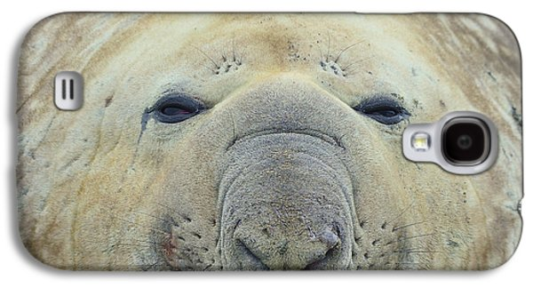 Elephant Seals Galaxy S4 Cases - Beach Bum Galaxy S4 Case by Tony Beck