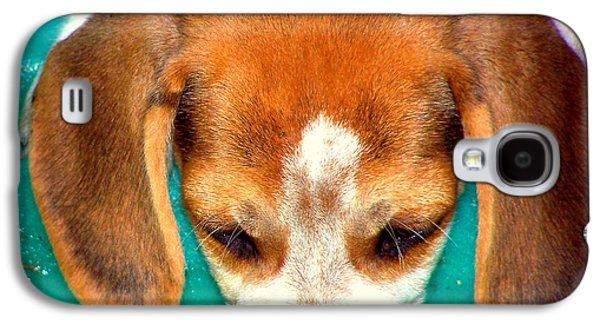 Canine Greeting Cards Digital Galaxy S4 Cases - Beagle Puppy 3 Galaxy S4 Case by Lynn Griffin