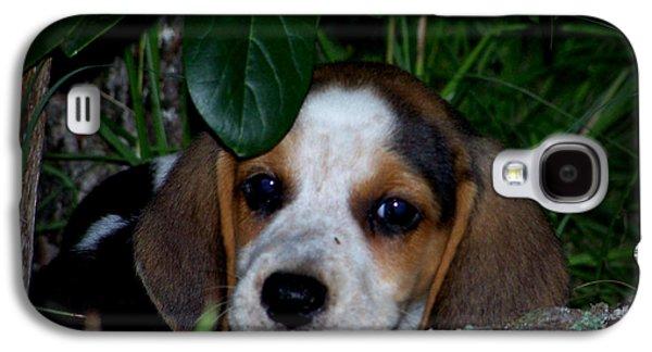 Canine Greeting Cards Digital Galaxy S4 Cases - Beagle Puppy Galaxy S4 Case by Lynn Griffin