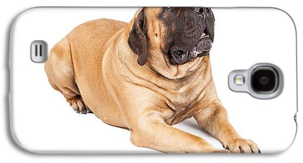 Working Breed Galaxy S4 Cases - Beautiful Mastiff Dog Laying Galaxy S4 Case by Susan  Schmitz