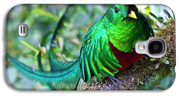 Fauna Photographs Galaxy S4 Cases - Beautiful Quetzal 4 Galaxy S4 Case by Heiko Koehrer-Wagner