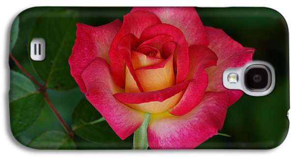 Indiana Flowers Galaxy S4 Cases - Beautiful Rose Galaxy S4 Case by Sandy Keeton
