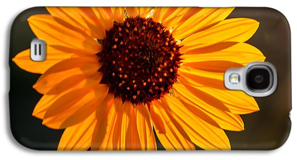Haybale Galaxy S4 Cases - Beautiful Sunflower Galaxy S4 Case by Robert Bales