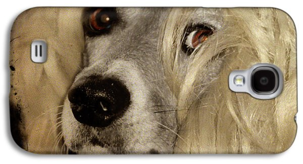 Puppy Digital Art Galaxy S4 Cases - Beauty Galaxy S4 Case by Gothicolors Donna Snyder