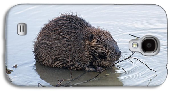 Beaver Chewing On Twig Galaxy S4 Case by Chris Flees