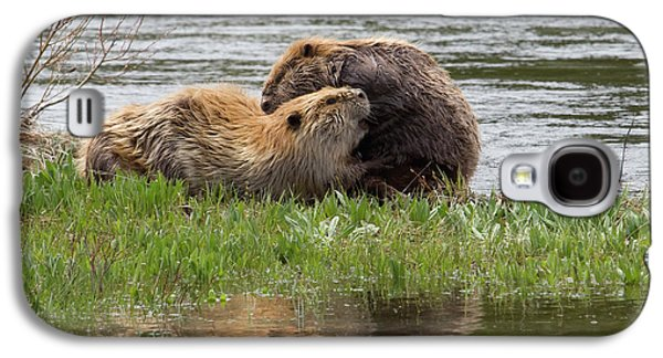 Beaver Pair Grooming One Another Galaxy S4 Case by Ken Archer