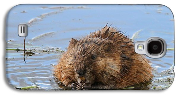 Beaver Portrait Galaxy S4 Case by Dan Sproul