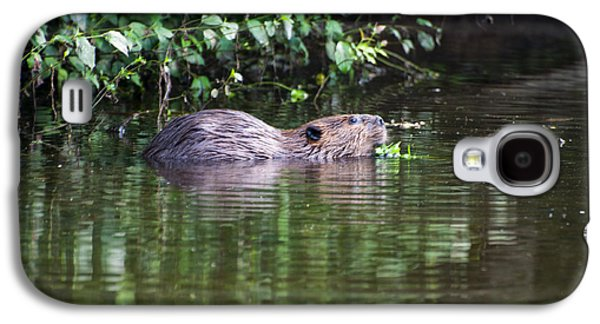 beaver swims in NC lake Galaxy S4 Case by Chris Flees