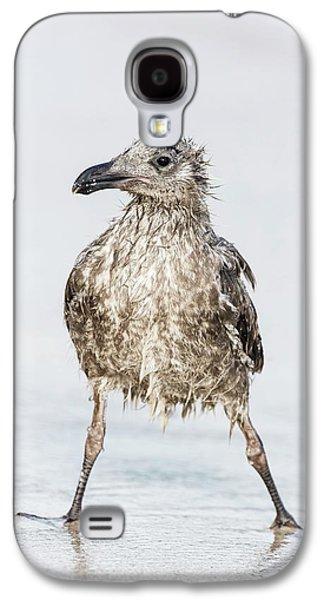 Bedraggled Juvenile Kelp Gull Galaxy S4 Case by Peter Chadwick