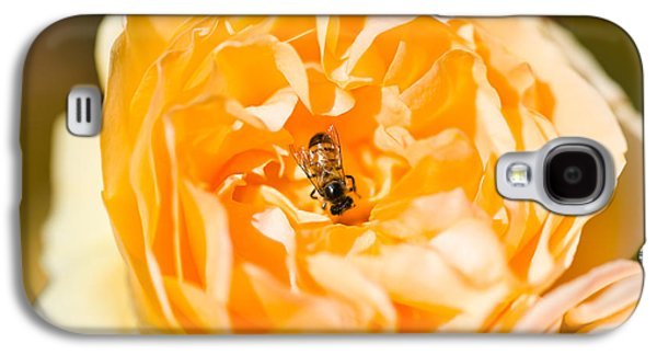 Pollinate Galaxy S4 Cases - Bee Pollinating A Yellow Rose, Beverly Galaxy S4 Case by Panoramic Images
