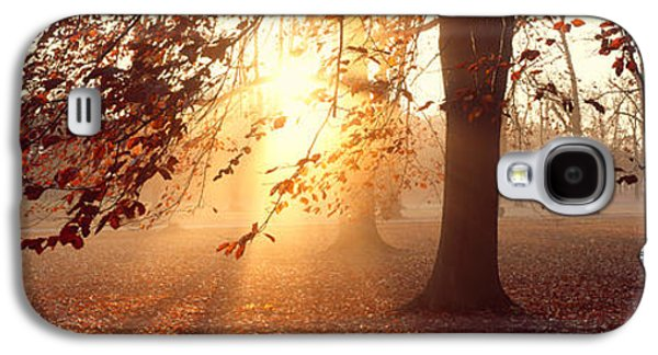 Sun Galaxy S4 Cases - Beech Trees Uppland Sweden Galaxy S4 Case by Panoramic Images