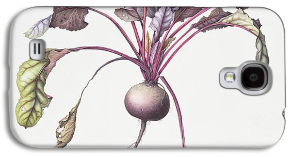 Root Galaxy S4 Cases - Beetroot, 1995 Wc On Paper Galaxy S4 Case by Margaret Ann Eden