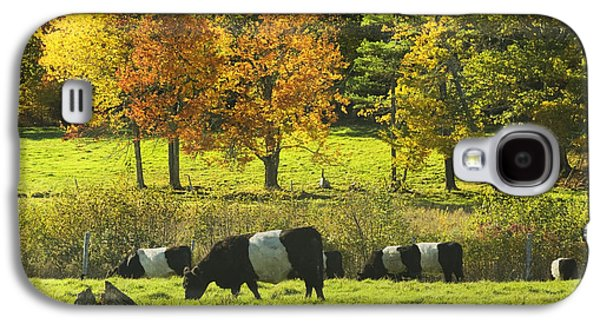 Maine Meadow Galaxy S4 Cases - Belted Galloway Cows Grazing On Grass In Rockport Farm Fall Maine Photograph Galaxy S4 Case by Keith Webber Jr