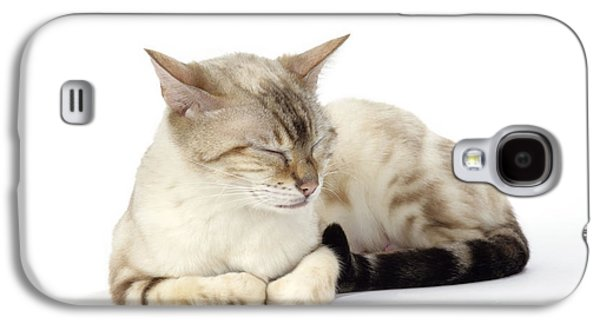 Marble Eye Galaxy S4 Cases - Bengal Cat, Asleep Galaxy S4 Case by John Daniels
