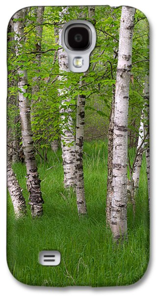 Maine Meadow Galaxy S4 Cases - Birch Trees In The Great Meadow, Acadia Galaxy S4 Case by Panoramic Images